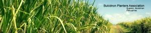 bukidnonplanters