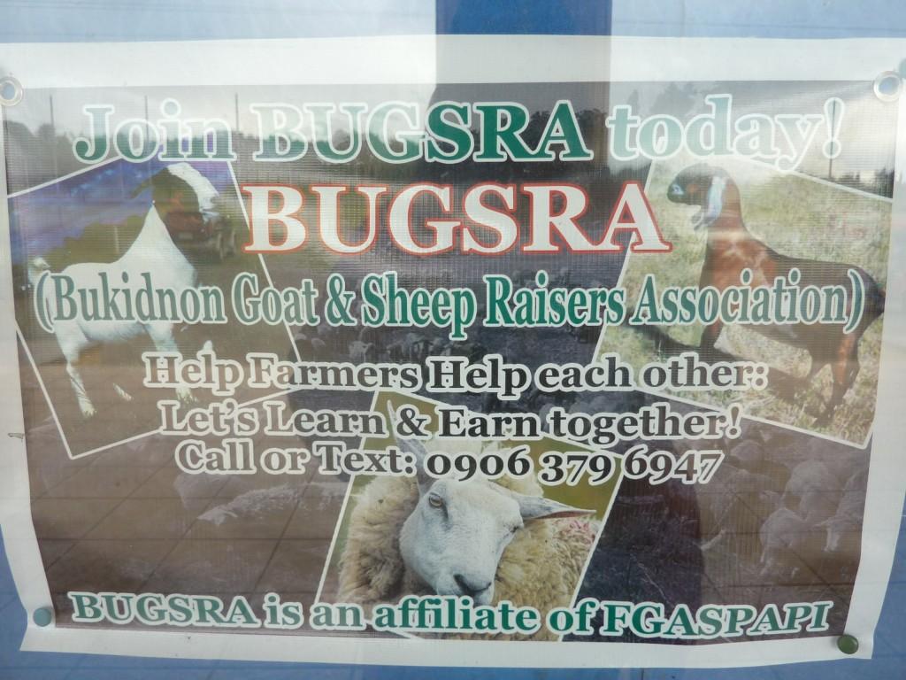 bukidnon goat and sheep raisers association | bugsra