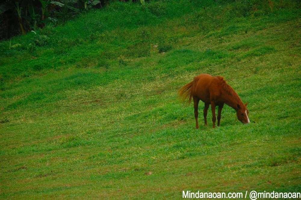 ranchers-steakhouse-malaybalay