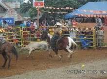 kaamulan 2015 rodeo